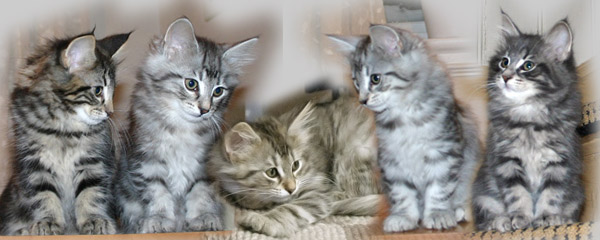 Dini's and Prince Rilian's kittens 2010